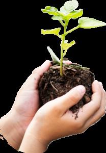 Girl Holding Soil Green Plant
